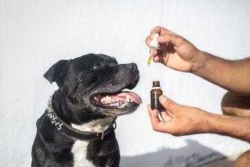 douleurs arthritiques chien