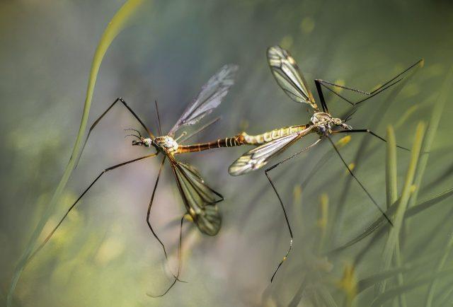 Trucs et astuces contre les moustiques